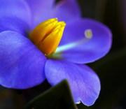 Цветы срезанные оптом от BuyFlowers.com.ua