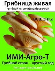 мицелий грибной