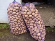 Продам бюджетный картофель,  картофель на переработку