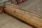 Пропитка для уничтожения насекомых в древесине – Lignofix I-Рrofi