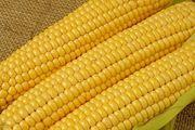Кукуруза на экспорт.