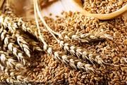 Пшеница,  кукуруза,  рапс,  соя