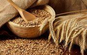 Пшеница, Украина
