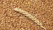 Пшеница, 2, 3 класс, куплю